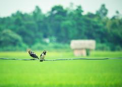 _41A8712 (Anwar's Gallery) Tags: ef70200mm f4l is usm bangladesh