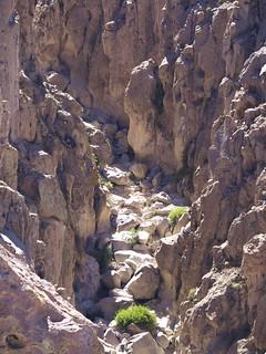 Région d'Arica, Parc Lauca