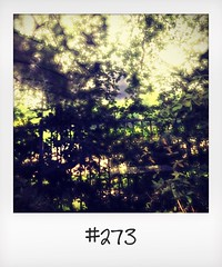 """#DailyPolaroid of 27-6-16 #273 • <a style=""""font-size:0.8em;"""" href=""""http://www.flickr.com/photos/47939785@N05/29001591865/"""" target=""""_blank"""">View on Flickr</a>"""