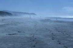 foggy (rainbow wasabi) Tags: foggy beach oregon coast summer pacific northwest shoreline seaside landscape seascape nature usa august ocean blue outdoor color water bird people travel