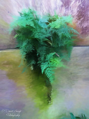 Fern (David Tovey Photography) Tags: fern plant green leaves artisticphotography art artistic davidtovey eyecacha english wall calm peaceful