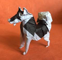 Husky (refold) (Baltorigamist) Tags: origami siberian husky malamute sled dog