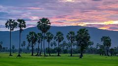 Dong Tarn (asioni) Tags: tree sky cloud twilight green rice farm mountain sunset sun amazing thailand phetchaburi beautiful blue