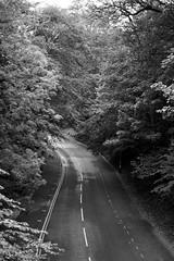 church ravine road 270/365 (#christopher#) Tags: trees road ravine vanishingpoint