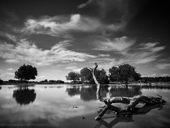 Somewhere To Spend An Afternoon (Richard Walker Photography) Tags: blackandwhite landscape water lake newforest nature clouds sky serene trees