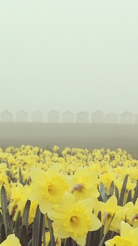Spring Fog in the South Worthing West Sussex
