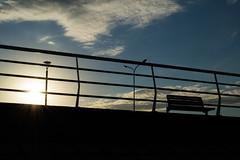 (martinnarrua) Tags: sunset sky sun sol argentina del puerto atardecer nikon shadows darkness sombra cielo amateur isla oscuridad nikond3100