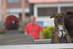 Malas pulgas (Ru GarFer) Tags: animal can perro mueca dientes enfado mamfero colmillos