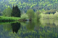 Vosges (denismartin) Tags: mountain lake france reflection tree spring reflet reflexions lorraine vosges gerardmer routedescretes longemer retournemer denismartin