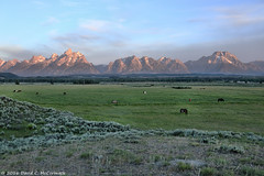 Horses Graze at Dawn Before the Teton Range, Grand Teton National Park, Wyoming (David C. McCormack) Tags: horses mountains landscape rockymountains wyoming tetons grandteton jacksonhole grandtetonnationalpark