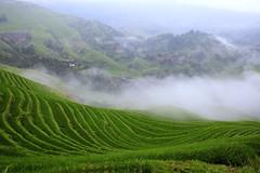 mountain village (wang_xiao) Tags: mountain green rice nature china guangxi longji terrace      fog morning village