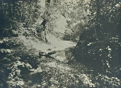 In the ravine (B) (PUC Special Collections) Tags: school college creek stream resort napa ravine norcal puc 1900s 1909 napacounty angwin howellmountain pacificunioncollege angwincalifornia conncreek