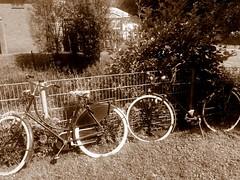 Old bicycles (uitdragerij) Tags: fietsen bicycles bikes oud old vintage herenfiets damesfiets klassiek classic
