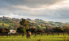Rural scene West Gippsland (laurie.g.w) Tags: sky horse cloud west green grass rural afternoon country australia scene victoria hills lowsun gippsland