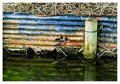 un dernier petit dtail (Marie Hacene) Tags: dtail amiens hortillonnages rouille rust eau reflet
