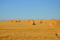 Bales (sgreen757) Tags: countryside rural agriculture crops harvest time straw hawkesbury upton south glos cotswold way morning dawn sunrise summer august 2016 glow nikon d7000