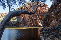 MacDonnell Ranges Ellery Creek Northern Territory-2-2