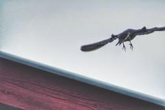 (***toile filante***) Tags: swallow schwalbe roof dach bird vogel nature natur summer sommer structure struktur