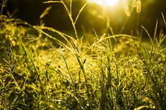 Sparkling Light (Matt Champlin) Tags: friday tgif life love random morning sunrise goodmorning nature outdoors canon 2016 fall autumn summer laborday peace peaceful dew bokeh macro