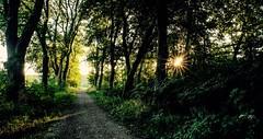 sunpath (korinthography ~sometimes off~) Tags: light forrest xt1 green xphotographer sunset trees nature gold morning bavaria sonne fujifilm