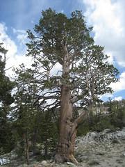 201607_0034 (GSEC) Tags: anseladamswilderness california ferncreek fernlake inyonationalforest sierranevadamountains unitedstates
