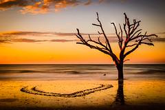 Boneyard Beach (jackdeblanc) Tags: boneyardbeach botanybayplantation edistobeachsouthcarolina seaturtle