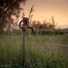 Old Hydrant (glendon27) Tags: ahumblelife d800 evening faucet grass hydrant nikon prairie summer sunset water saskatchewan canada ca