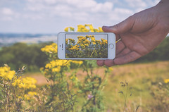 hand-apple-camera-field (ohiocornandwheat) Tags: camera commercialphotography concept countryside edgregory free freestockphotos publicdomain stockimages stockphoto stockphotography stokpic yellow apple green hand iphone iphone5 lanscape man mobile nature ophoto photgraphy smartphone tech technology