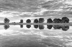 Natural Symmetry (Pieter ( PPoot )) Tags: kloosterveld npdwingelderveld symmetry trees reflection clouds