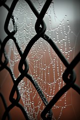Pearls of Nature (Karen Tregoning Photography) Tags: detail macro green love nature water beautiful closeup fence spider morninglight dewdrops nice wire dof web spiderweb pearls depthoffield dew woven delicate jewels waterdroplets morningdew spun