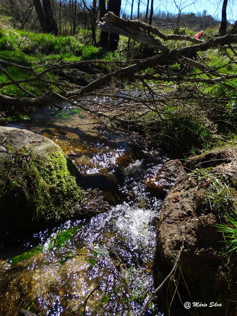 Águas Frias (Chaves) -  ... a água límpida que escorre lentamente no ribeiro ...