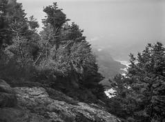 spruce, lichen, rock forms, near Little White Head, Monhegan, Maine, Mamiya 645 Pro, mamiya sekor 80mm f-2.8, 5.15.15 (steve aimone) Tags: ocean trees blackandwhite mamiya film monochrome mediumformat coast 645 rocks maine monochromatic pro forms coastline lichen spruce atlanticocean f28 monhegan seacoast 80mm monheganisland sekor