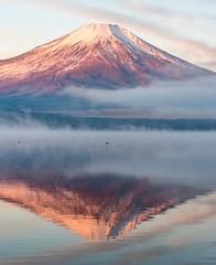 2016 Winter Fuji (shinichiro*) Tags:    jp 20160102ds22484 2016 crazyshin nikond4s afsnikkor2470mmf28ged fuji lakeyamanaka yamanashi japan january winter frost upsidedown