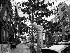 Art on the street of Brooklyn (Megan Crandlemire Photography) Tags: megancrandlemire olympus em1 micro43 omd zuiko street photography black white monochrome nyc bnf fotografiacallejera photographiederue