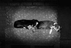 Sleep with you (christianhaward) Tags: dog pets blackwhite sleep perro dormir mascotas blanconegro degradado twodogs