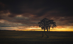 The Last Sunset (Iain Brooks) Tags: sunset tree field lines sunrise scotland nikon long exposure aberdeenshire aberdeen lone leading