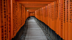 kioto (DROSAN DEM) Tags: sintoismo japon japan santuario templo shinto kioto columnas