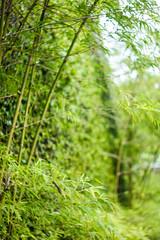 IMG_1669_1 (pavel.milkin) Tags: thailand phuket helios helios442 442 helioslens colour green street leaves bamboo wall