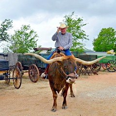 Howdy Y'all (The Old Texan) Tags: longhorn texas fredericksburg nikon wagons tamron trees cowboy