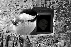 Mutual awareness (Vivid_dreams) Tags: blackandwhite bw detail art monochrome birds faces artistic wildlife rustic digitalart grain silo chickadee digitalphotography digitalmanipulation hss artisticmanipulation