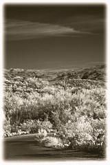 Saguaro #1 IR (hamsiksa) Tags: infrared digital digitalir arizona pimacounty saguaros saguaronationalpark tucson rinconmountains desert flora ocotillo sonaorandesert