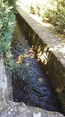 Pazo de Oca. Estanque. (Nessynish) Tags: pazodeoca garden jardn agua water estanque minilake swan ducks patos cisne canal