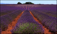 INFINITE LAVANDER . (TOYOGRACOR) Tags: flowers people panorama france flores color azul canon flickr colours dof purple fav50 windmills explore galaxy fotos panoramica lavander provence paysage francia pueblos lanscape campos provenza nwn lavanda costaazul godlovesyou valensole fav100 bej mywinners abigfave flickrdiamond platinumheartward flordelavanda panoramafotografico mygearandme mygearandmepremium mygearandmebronze mygearandmesilver anpegon