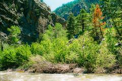 River (amalik008) Tags: trees wild forest 35mm river spring colorado cross canyon eldorado greenery processed