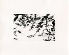 (?) Tags: darkroomprint warmtone ilford fiber vietnam blackwhite