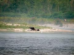 _S477429725 (Rosshox) Tags: naturalphotography natura wildlife action animals animali fujifilm fujifilmxs1 volatili