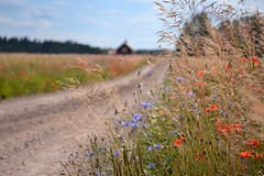 On our way to Stockholm... (daantjedoest) Tags: sweden zweden barn redhouse flowers