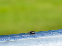 Fly with green bokeh (guido.elting) Tags: fly fliege zoom stahl grau grn zink