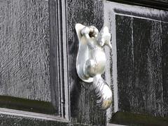 Squirrel Knocker (Thomas Kelly 48) Tags: panasonic lumix fz150 woolton liverpool squirrel knocker squirrelknocker