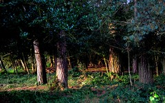 Light in the Darkness (hapsnaps) Tags: hapsnaps hampshire newforest 2016 summer woods forest trees earlymorninglight scary badlands